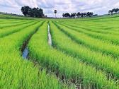 Phương pháp xây dựng công thức thực nghiệm tính thấm trên ruộng lúa trong giai đoạn ngập nước ở đồng bằng Bắc bộ